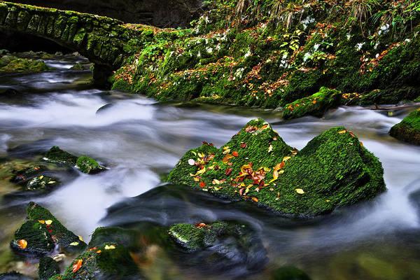 Photograph - Autumn Scene by Ivan Slosar