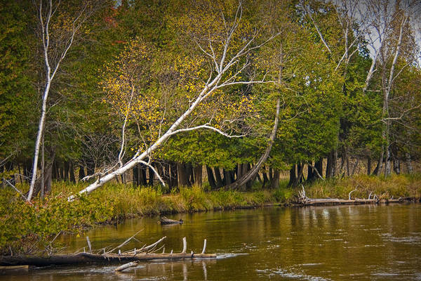 Manistee River Wall Art - Photograph - Autumn Scene On The Little Manistee River by Randall Nyhof