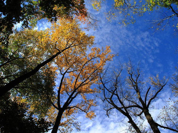 Photograph - Autumn Skyscape by Frank Romeo