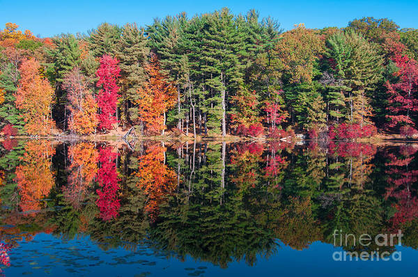 Photograph - Autumn Spectacular by Anthony Sacco