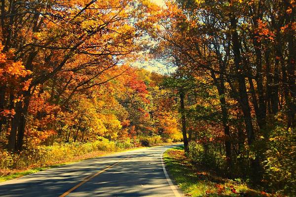 Photograph - Autumn Splendor by Candice Trimble