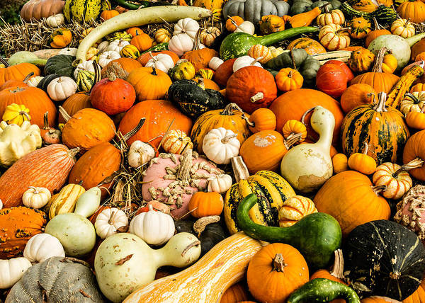Gourd Photograph - Autumn Splendor by Jon Woodhams