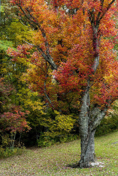 Photograph - Autumn Splendor by Terry DeLuco