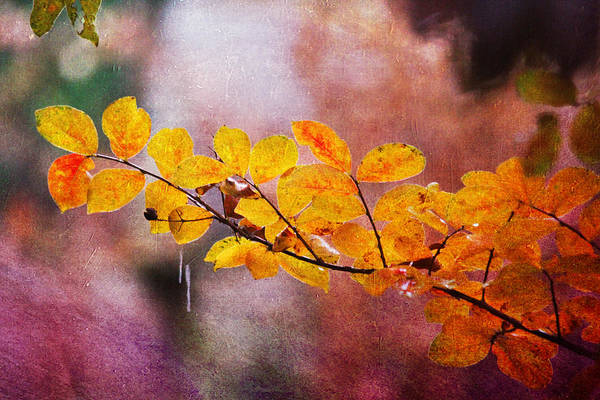 Photograph - Autumn Splendor by Trina  Ansel