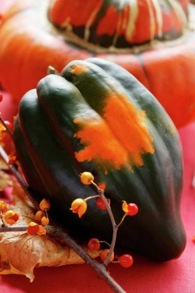 Acorn Squash Photograph - Autumn Squash Still Life With Acorn Squash by Foodcollection