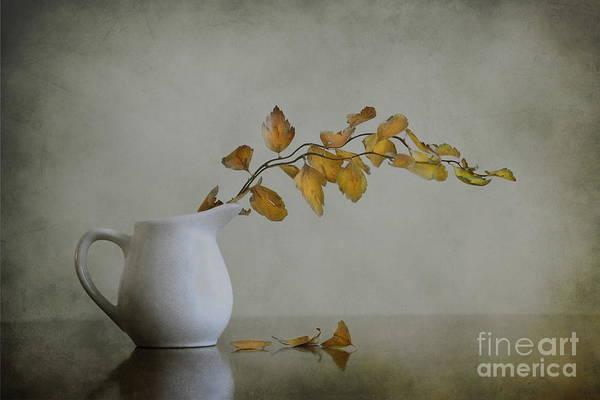 Autumn Leaves Photograph - Autumn Still Life by Diana Kraleva