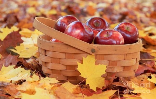 Photograph - Autumn Still Life by Karin Pinkham