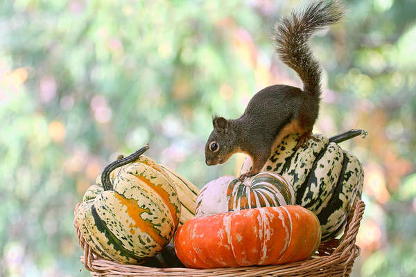 Photograph - Autumn Still Life With Squirrel by Peggy Collins