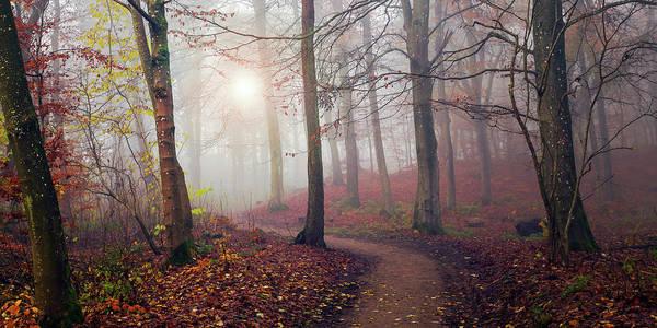 Wall Art - Photograph - Autumn Sun. by Leif L?ndal