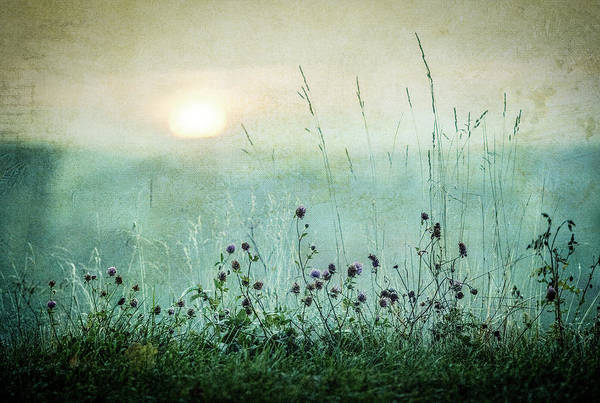 Green Grass Photograph - Autumn Sunrise by ?smund Kv?rnstr?m