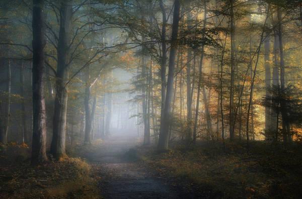 Autumn Foliage Wall Art - Photograph - Autumn Symphony by Norbert Maier