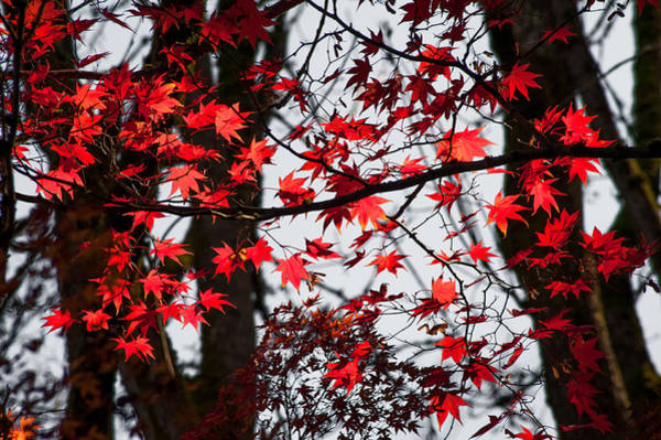 Photograph - Autumn Time by Crystal Hoeveler