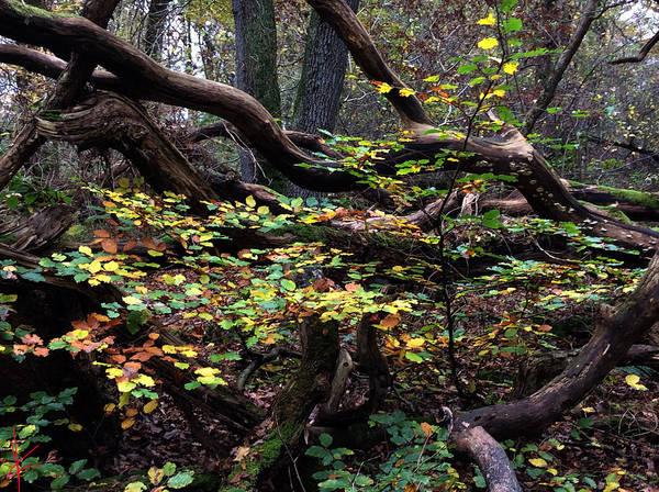 Photograph - Autumn Time In Denmark  by Colette V Hera  Guggenheim