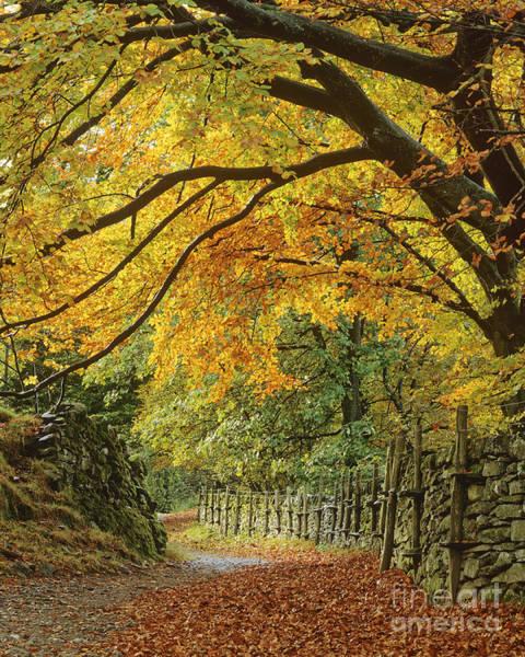 Grasmere Wall Art - Photograph - Autumn Track by Derek Croucher