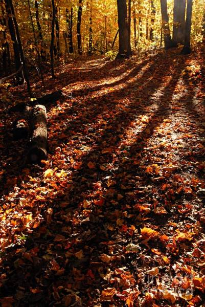Photograph - Autumn Trail by Larry Ricker