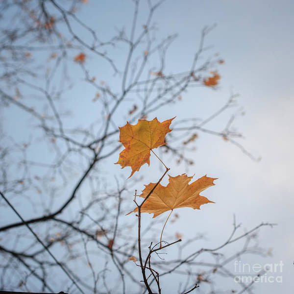 Wall Art - Photograph - Autumn Tree Leaves by Konstantin Sutyagin