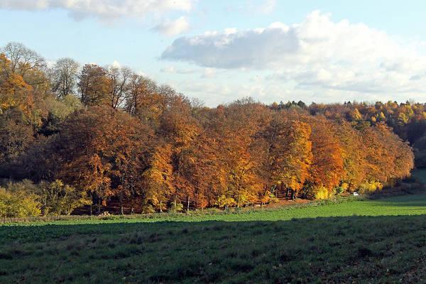 Photograph - Autumn Tree Line by Tony Murtagh