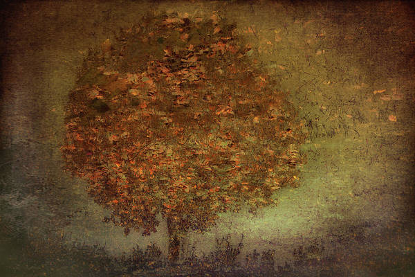 Painterly Photograph - Autumn Tree by Nel Talen