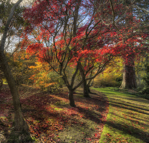 Photograph - Autumn Tree Sunshine by Ian Mitchell