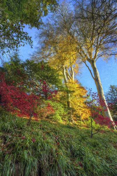 Photograph - Autumn Tree Sunshine V2 by Ian Mitchell