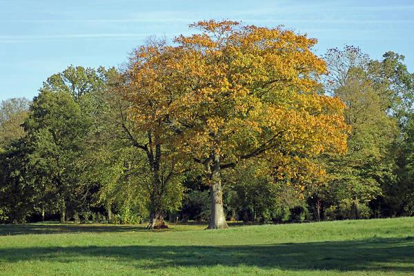 Photograph - Autumn Tree by Tony Murtagh
