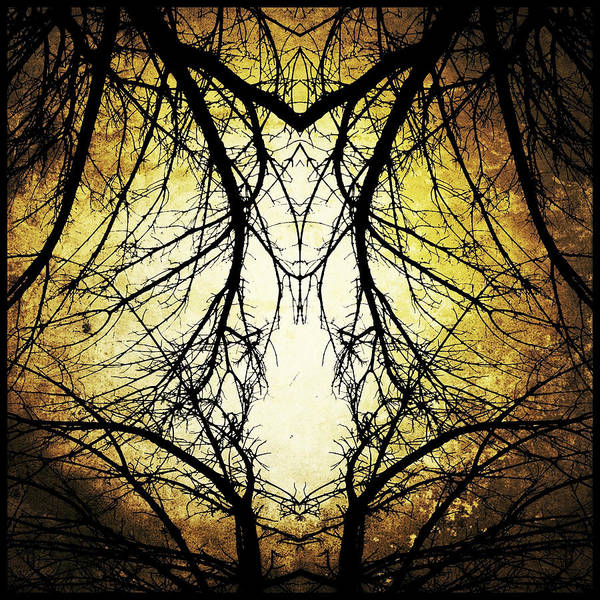 Photograph - Autumn Tree Veins by Natasha Marco