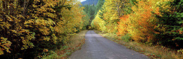Thicket Photograph - Autumn Trees Along Road In Mt Hood by Panoramic Images