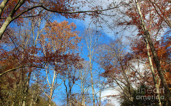 Photograph - Autumn Trees And Heaven by Karen Adams