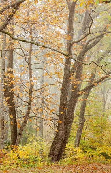 Photograph - Autumn Trees By Jo Ann Tomaselli by Jo Ann Tomaselli