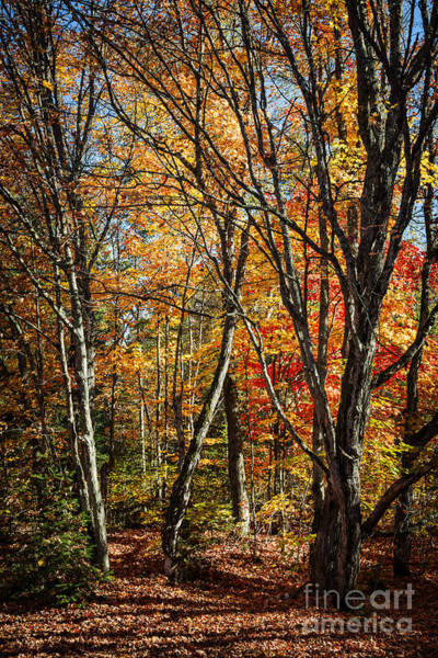 Wall Art - Photograph - Autumn Trees by Elena Elisseeva