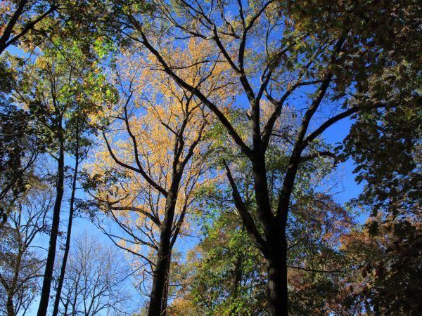 Photograph - Autumn Trees by Frank Romeo