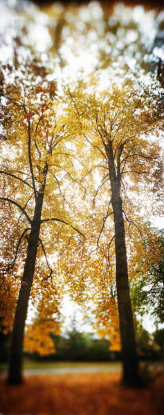 Volunteer Wall Art - Photograph - Autumn Trees In A Park, Volunteer Park by Panoramic Images