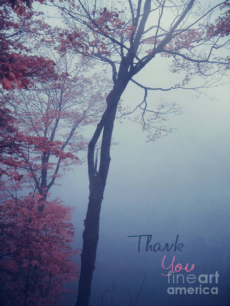 Wall Art - Photograph - Autumn Trees In The Mist - Thank You Card by Aimelle