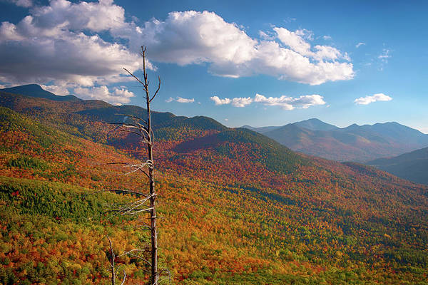 Baxter State Park Photograph - Autumn Trees On Mountain, Baxter by Panoramic Images