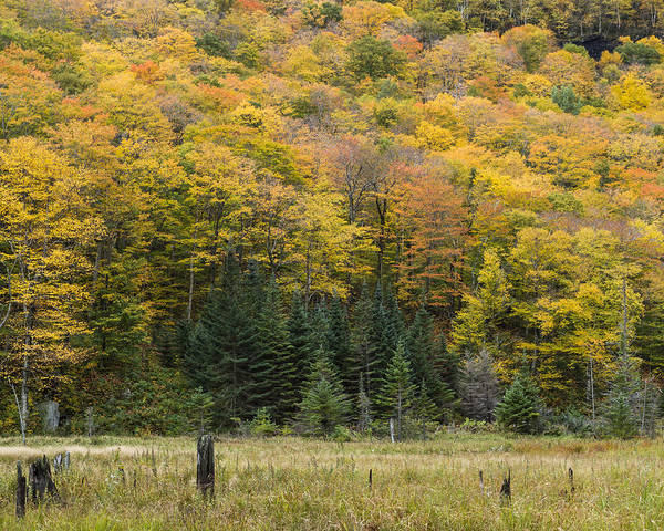 Smugglers Notch Photograph - Autumn Trees Smugglers Notch Vermont Mount Mansfield Beaver Pond by Andy Gimino