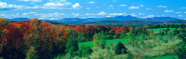 Vt Wall Art - Photograph - Autumn Trees Vt by Panoramic Images
