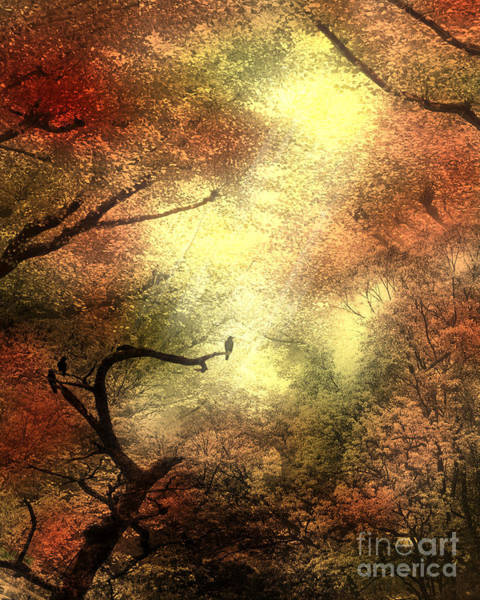 Digital Art - Autumn Trees With Light Shining Through by Elle Arden Walby