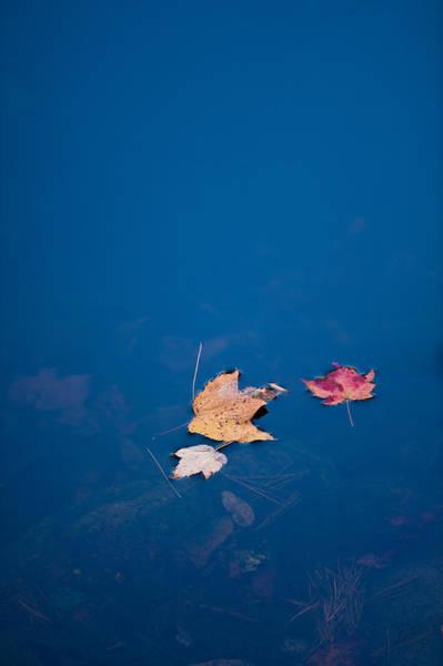 Photograph - Autumn Trio by Joye Ardyn Durham