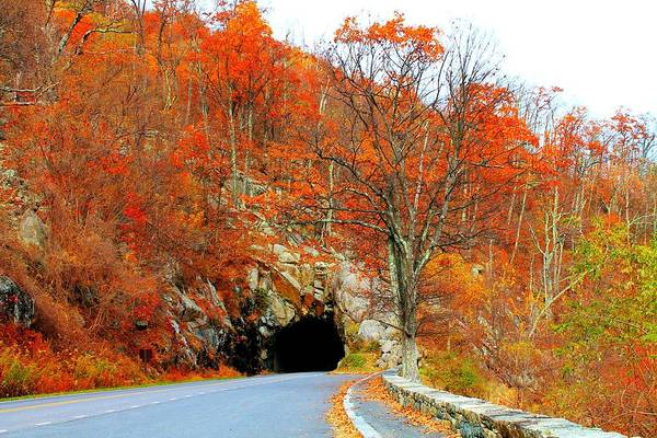 Photograph - Autumn Tunnel by Candice Trimble