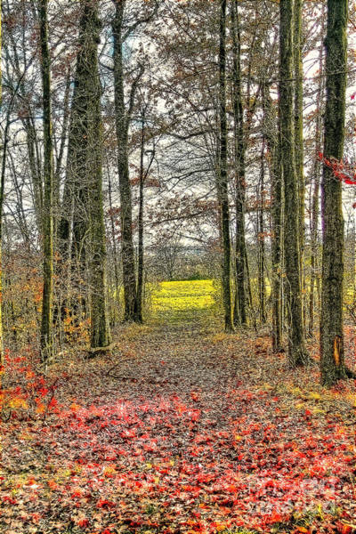Photograph - Autumn Tunnel Vision by Jim Lepard