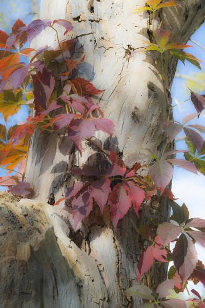Autumn Veil Art Print