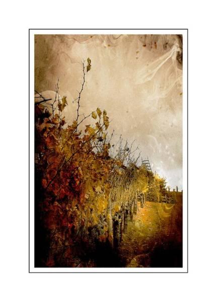 Photograph - Autumn Vines by Michael Hope