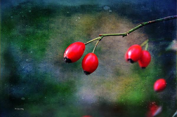 Photograph - Autumn Vitamins by Randi Grace Nilsberg