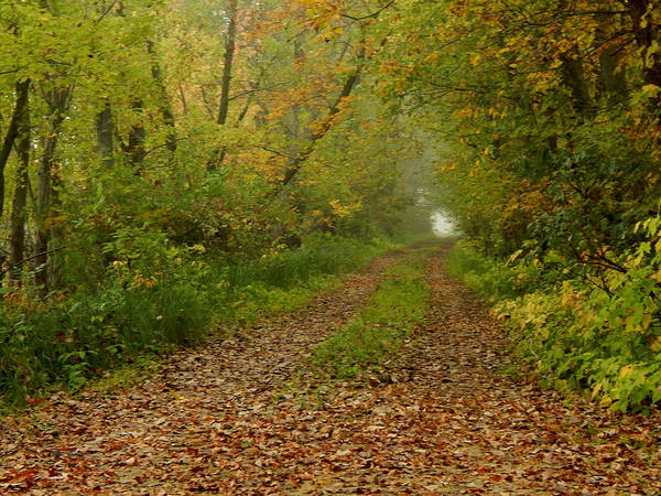 Photograph - Autumn Wagon Trail by Wild Thing
