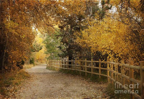 Wall Art - Photograph - Autumn Walk by Juli Scalzi