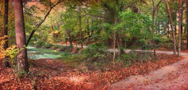 Photograph - Autumn Walk by Paulette B Wright