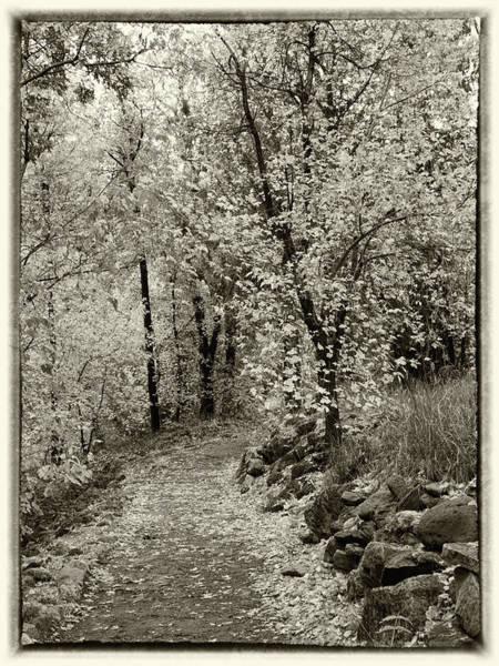 Photograph - Autumn Walk - Sepia Tone by Harold Rau