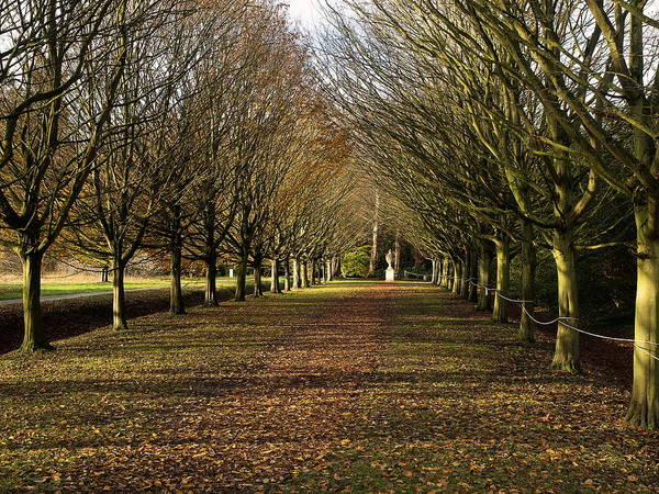 Photograph - Autumn Walk by Stephen Barrie