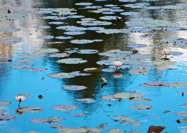 Photograph - Autumn Waterlilies by Kristin Hatt