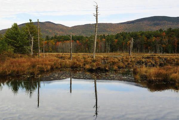 Wall Art - Photograph - Autumn Wetlands by Luke Moore